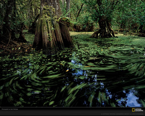 big-cypress-reservation-florida-xl.jpeg